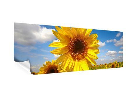 Poster Panorama Das Feld der Sonnenblumen