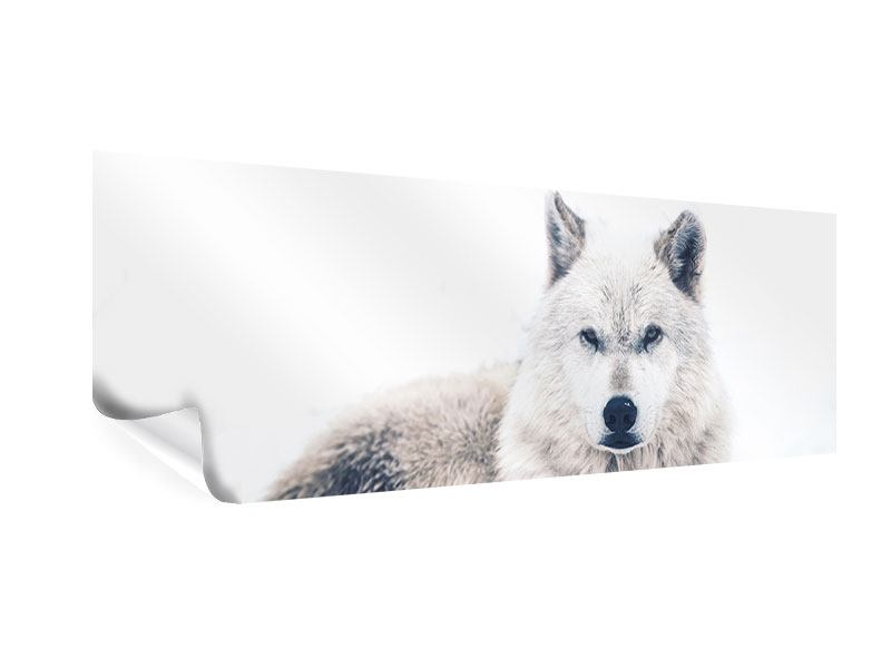 Poster Panorama Der Wolf