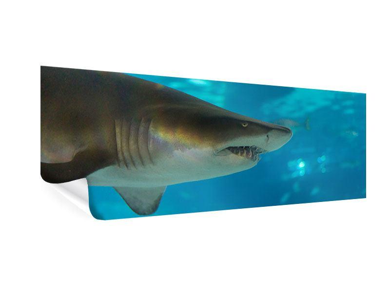 Poster Panorama Der Haifisch