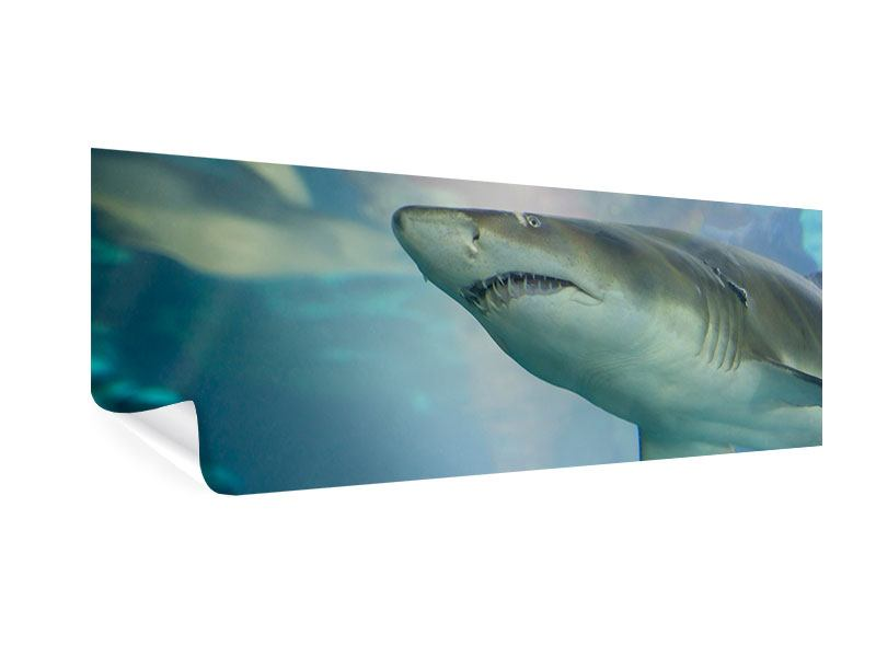 Poster Panorama Hai