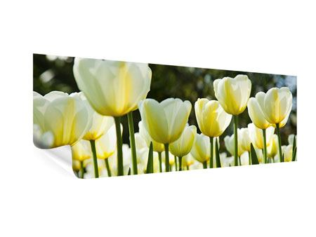 Poster Panorama Tulpen bei Sonnenuntergang