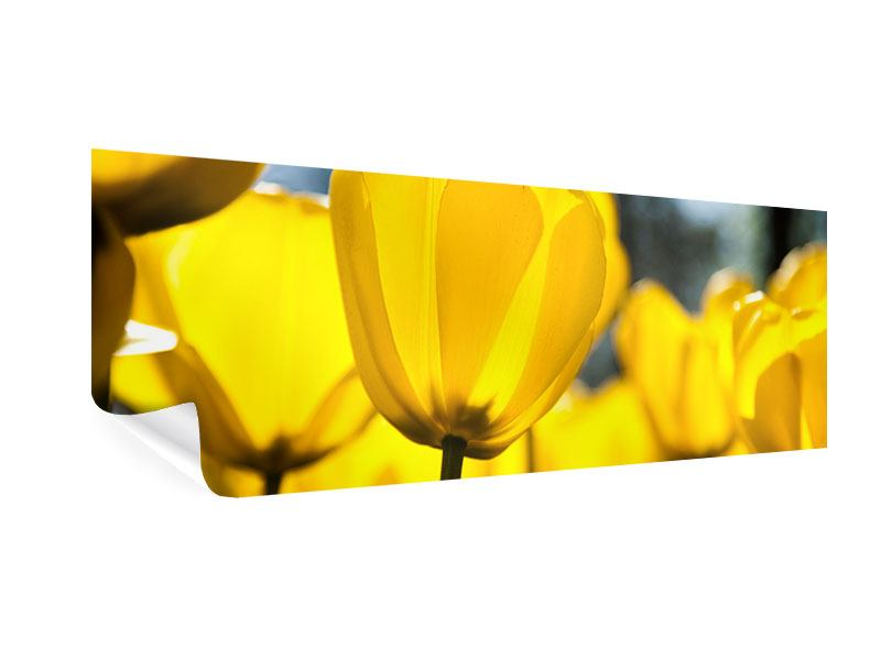 Poster Panorama Gelbe Tulpen in XXL
