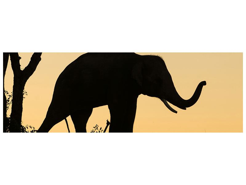 Poster Panorama Elefant an der Wand