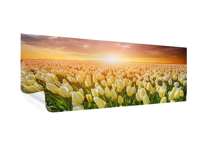 Poster Panorama Sonnenaufgang bei den Tulpen