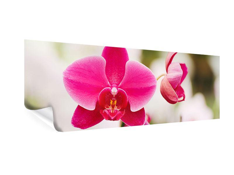 Poster Panorama Perspektivische Orchideen