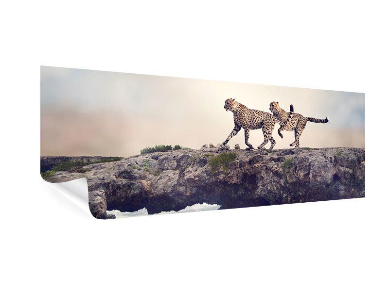 Poster Panorama Zwei Geparden