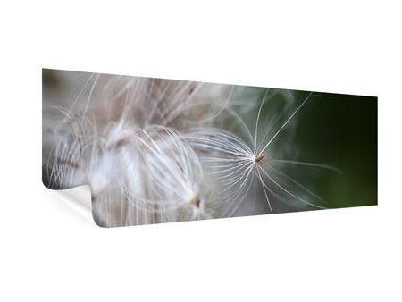 Poster Panorama Close up Blütenfasern