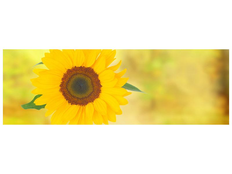 Poster Panorama Die Sonnenblume