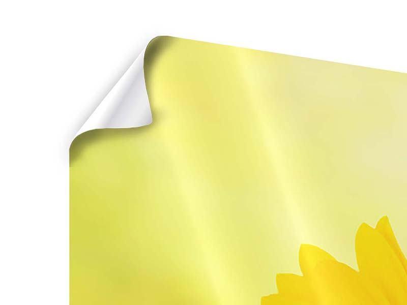 Poster Panorama Die Sonnenblume