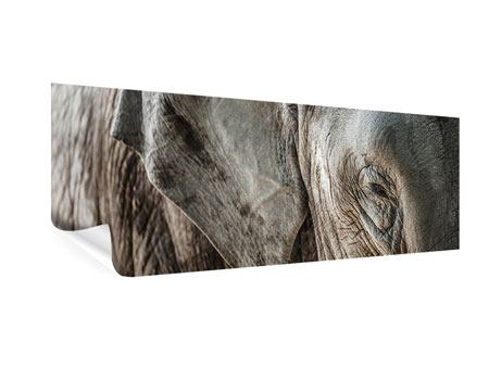 Poster Panorama Close Up Elefant