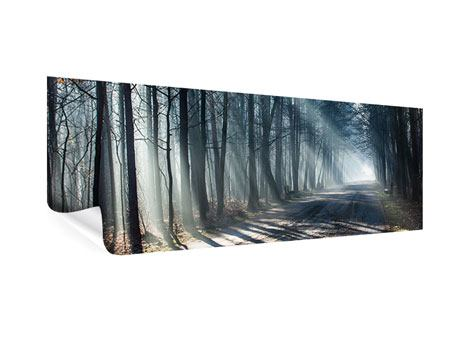 Poster Panorama Wald im Lichtstrahl