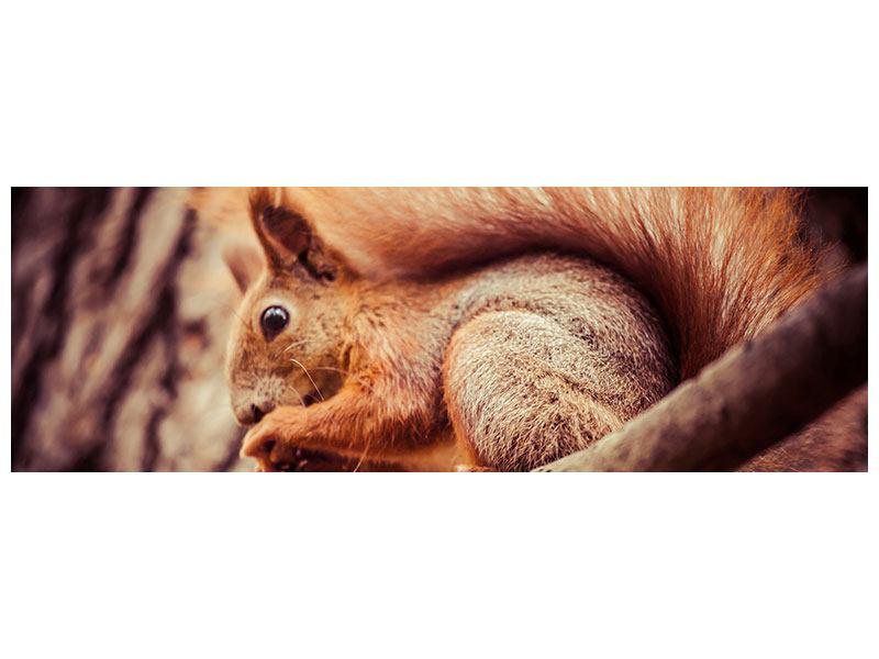 Poster Panorama Eichhörnchen