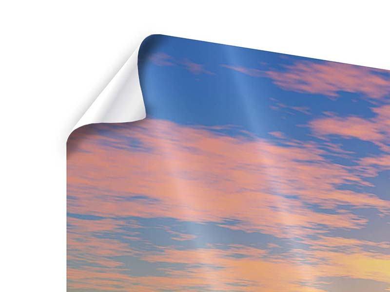 Poster Panorama Blumenpanorama bei Sonnenuntergang