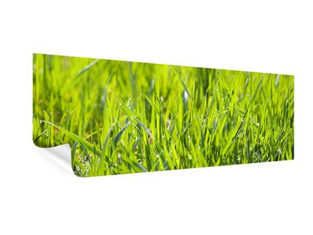 Poster Panorama Gras im Morgentau
