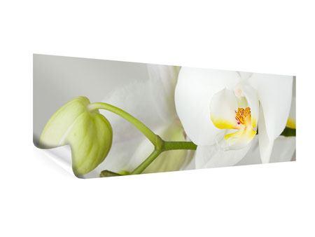 Poster Panorama Riesenorchidee