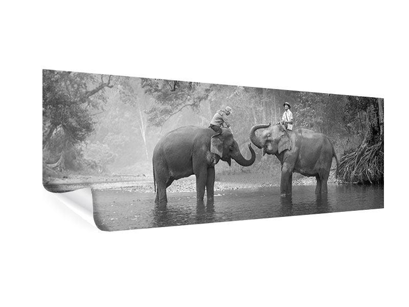 Poster Panorama Zwei Elefanten