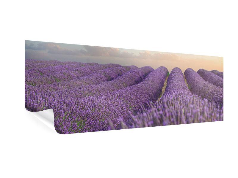 Poster Panorama Das blühende Lavendelfeld
