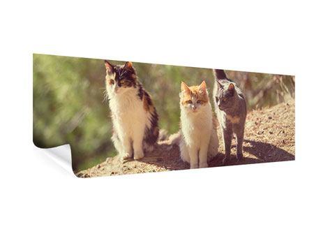 Poster Panorama Katzen im Garten