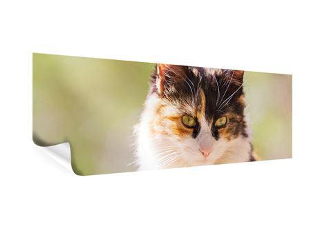 Poster Panorama Katzenbesuch