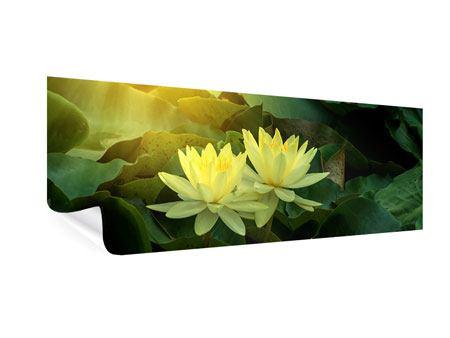 Poster Panorama Wilde Lotus