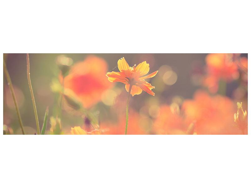 Poster Panorama Blütenpracht
