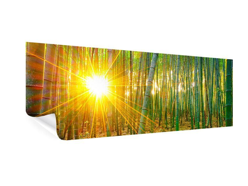 Poster Panorama Bambusse