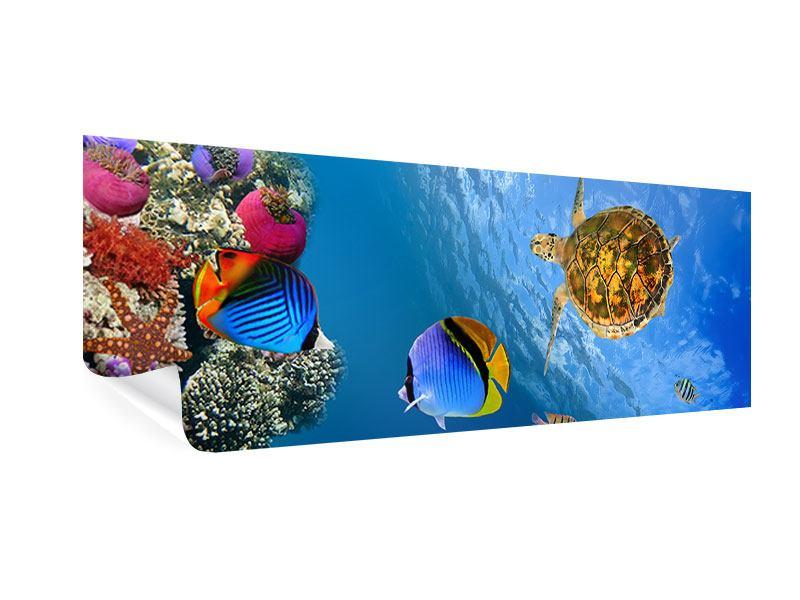Poster Panorama Fisch im Wasser