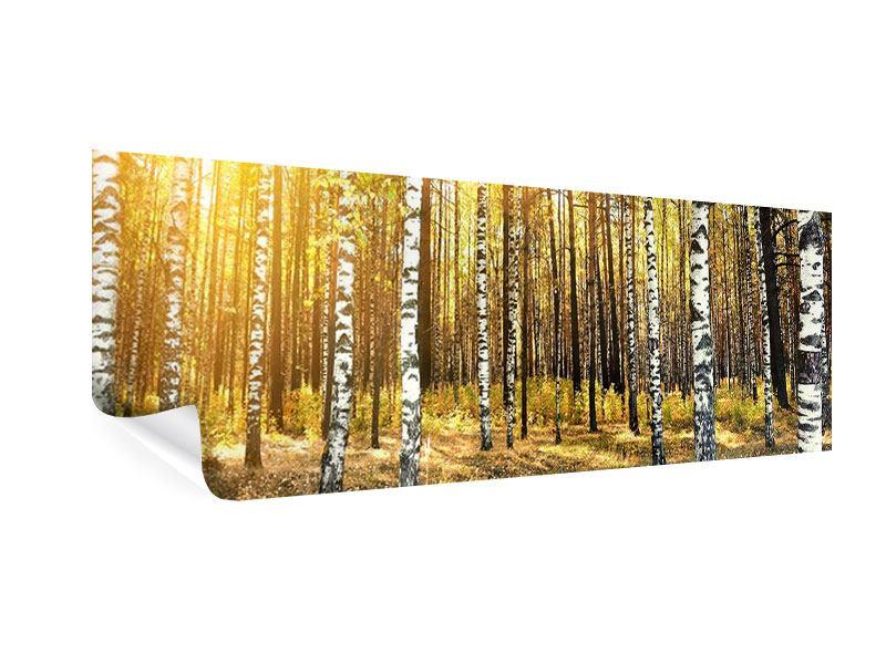 Poster Panorama Birkenwald