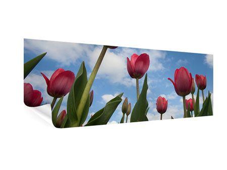 Poster Panorama Tulpen im Himmel