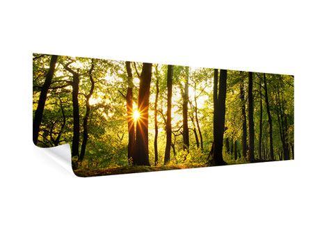 Poster Panorama Sonnenuntergang zwischen den Bäumen