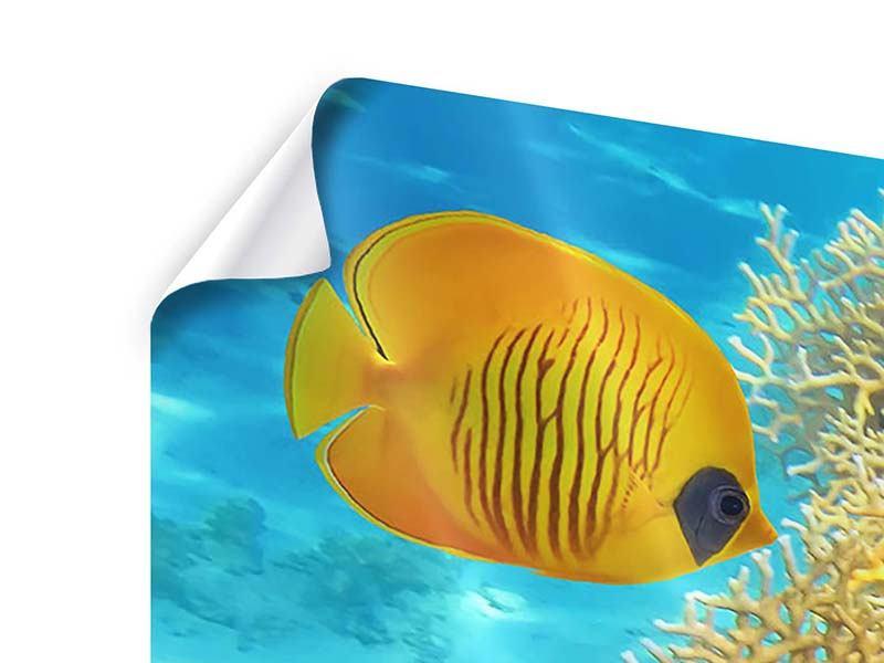 Poster Panorama Fischreichtum