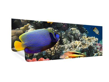 Poster Panorama Das Aquarium
