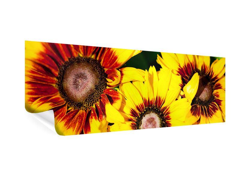 Poster Panorama Reife Sonnenblumen