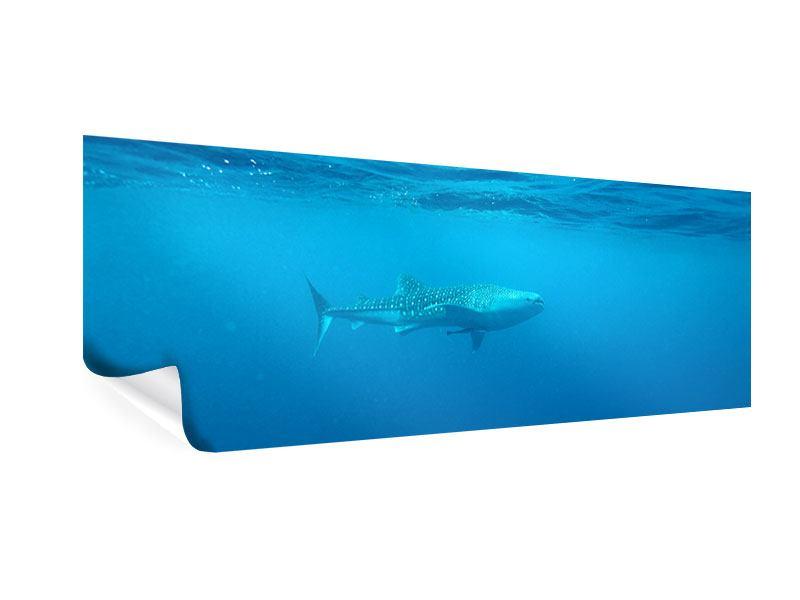 Poster Panorama Der Walhai