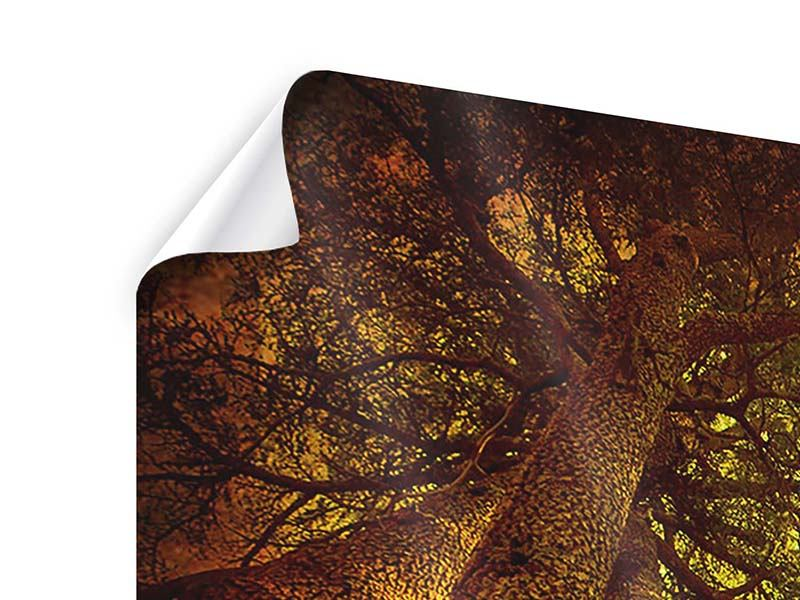 Poster Panorama Cedar Baum