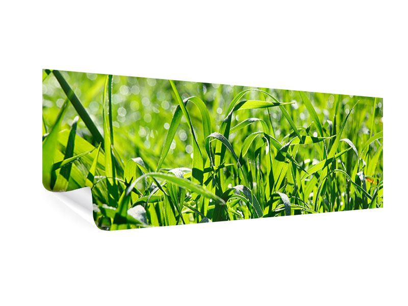Poster Panorama Sonniges Gras