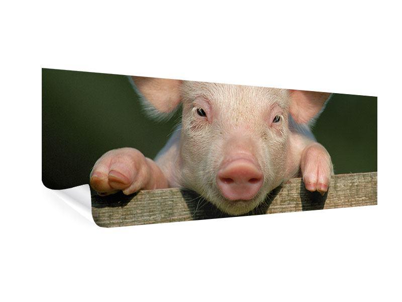 Poster Panorama Schweinchen Namens Babe