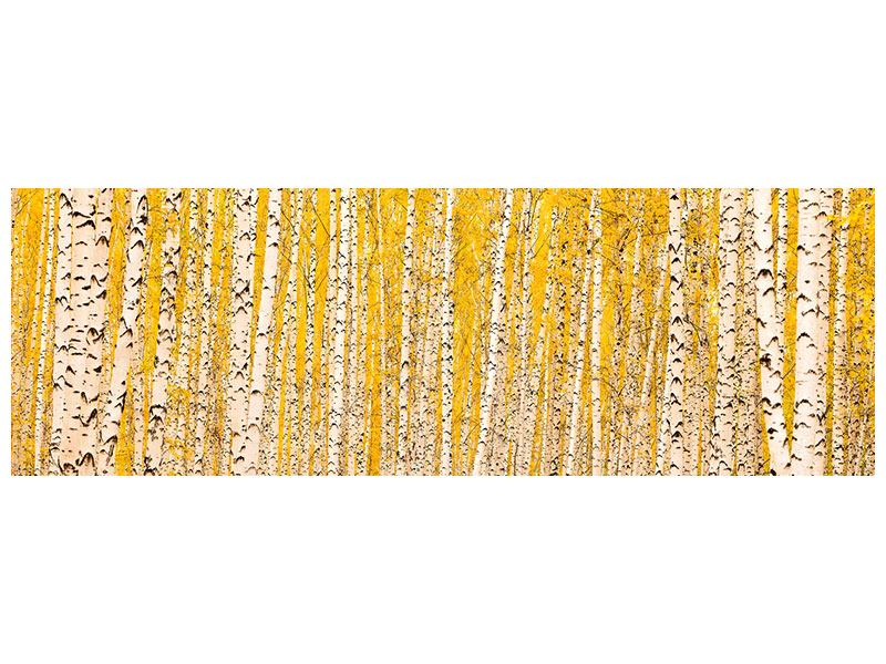 Panoramic Poster The Birch Forest In Autumn