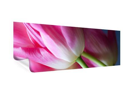 Poster Panorama Makro Tulpen