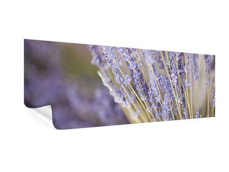 Poster Panorama Lavendel XXL