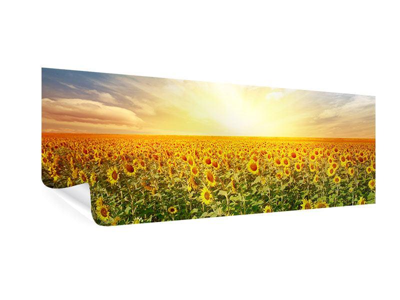 Poster Panorama Ein Feld voller Sonnenblumen