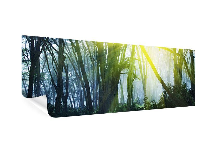 Poster Panorama Sonnenstrahlen im Wald