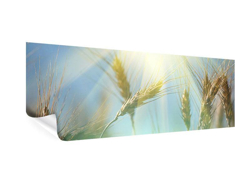 Poster Panorama König des Getreides