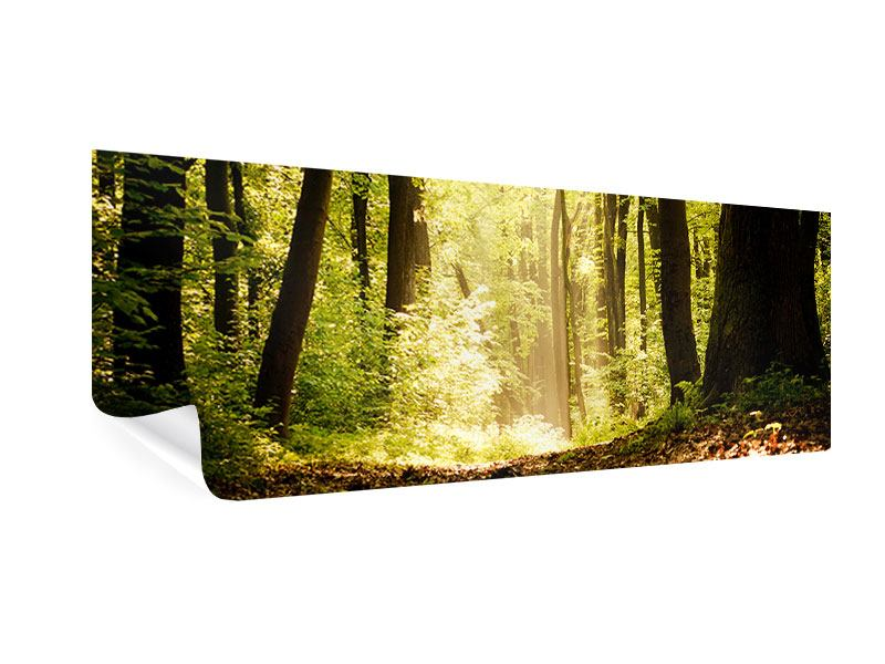 Poster Panorama Sonnenaufgang im Wald