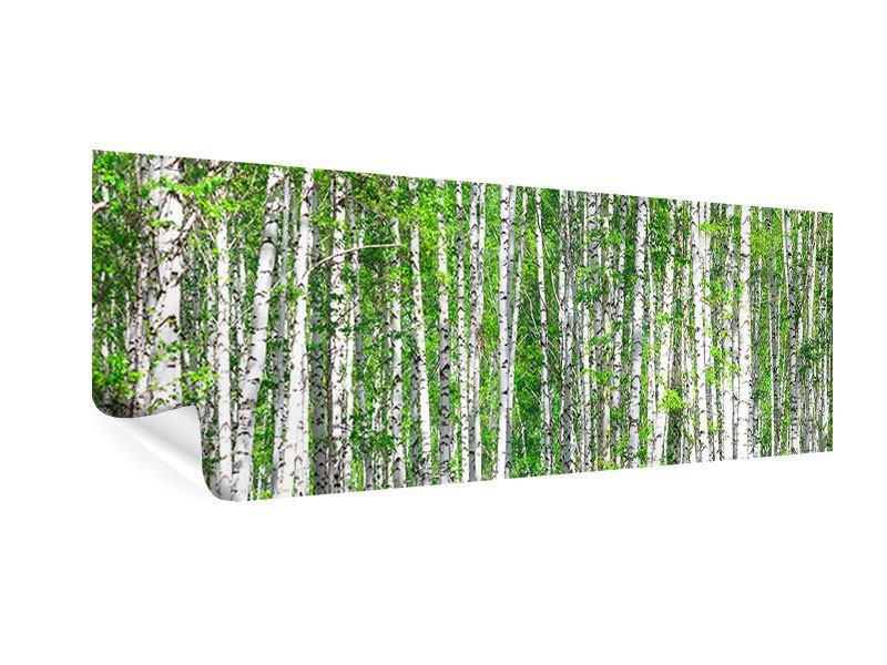 Poster Panorama Der Birkenwald