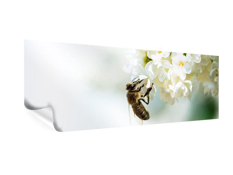 Poster Panorama Die Hummel und die Blüte