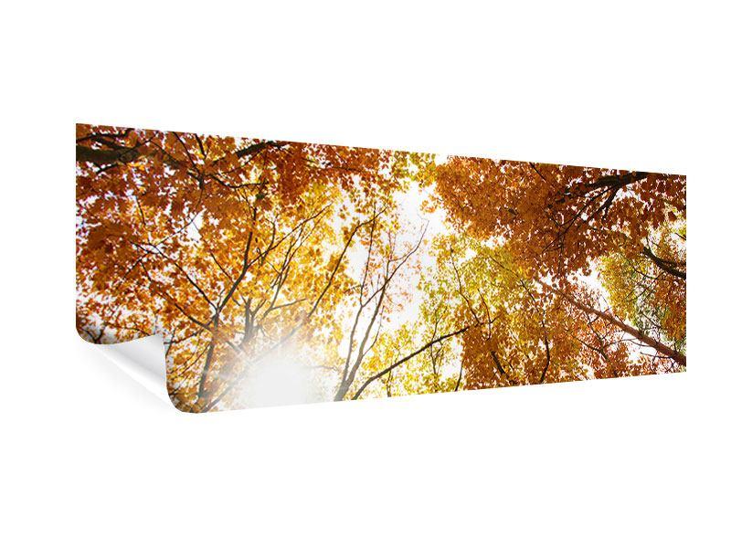 Poster Panorama Herbstbäume