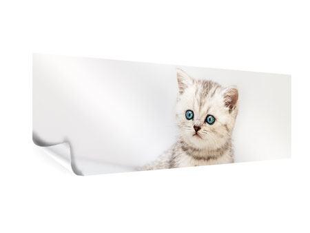 Poster Panorama Katzenbaby