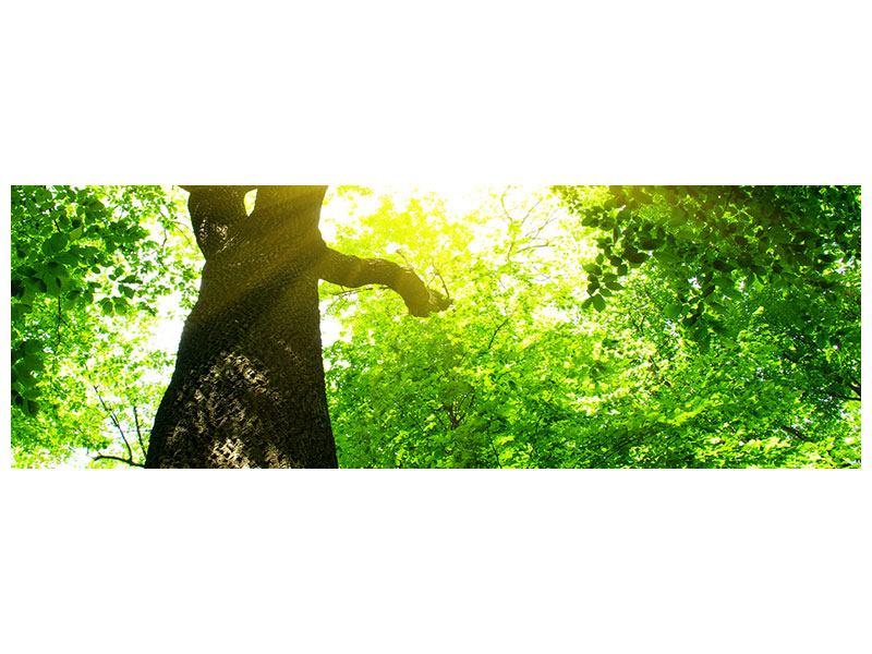 Poster Panorama Baum