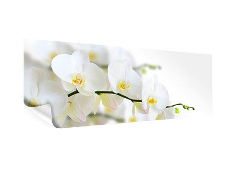 Poster Panorama Weisse Orchideen